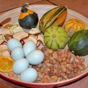 Docena huevos fértiles gallina araucana (huevos azules)