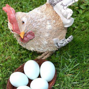 Pack 6 docenas huevos fértiles gallina araucana (huevos azules)
