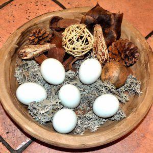 Pack 8 docenas huevos fértiles gallina araucana (huevos azules)